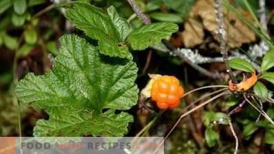 Cloudberries opslaan